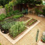garden veg plot